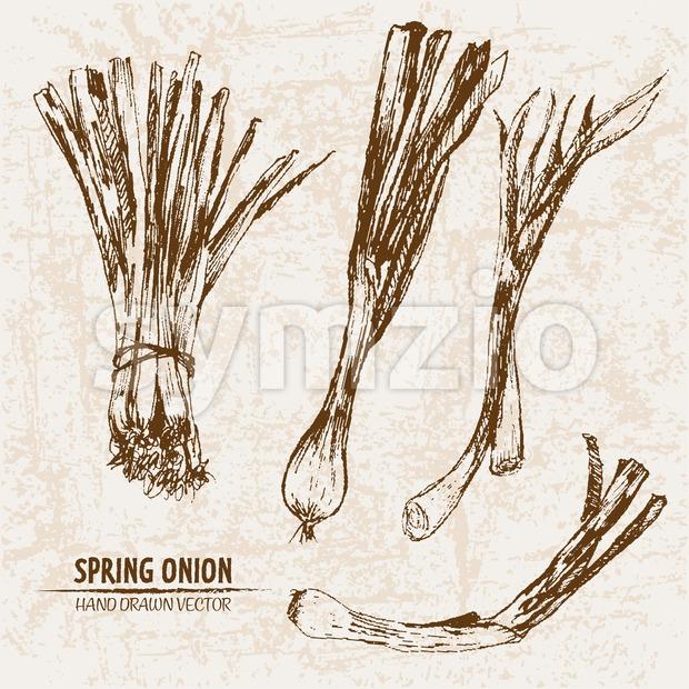 Digital vector detailed line art spring onion vegetable hand drawn retro illustration collection set. Thin artistic pencil outline. Vintage ink flat Stock Vector