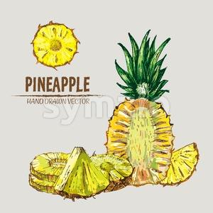 Digital vector detailed line art color pineapple fruit hand drawn retro illustration collection set. Thin artistic pencil outline. Vintage ink flat Stock Vector