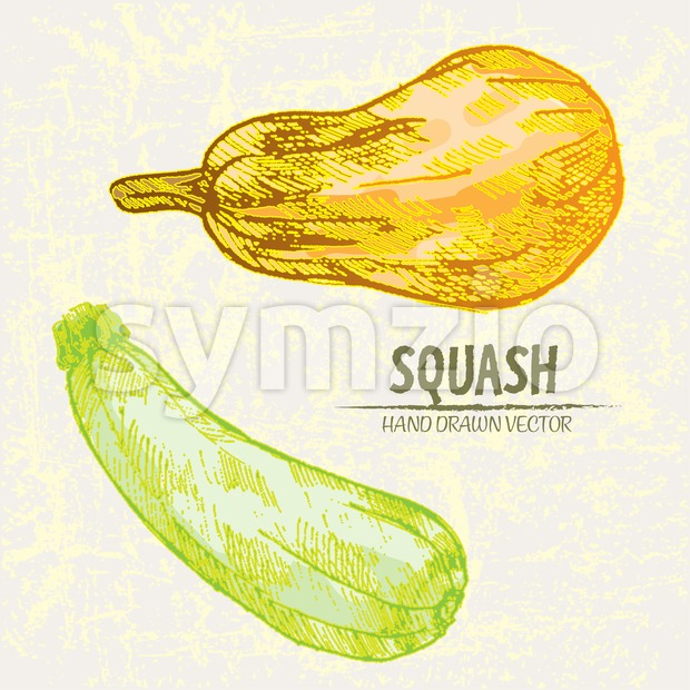 Digital vector detailed line art color squash vegetable hand drawn retro illustration collection set. Thin artistic pencil outline. Vintage ink flat Stock Vector