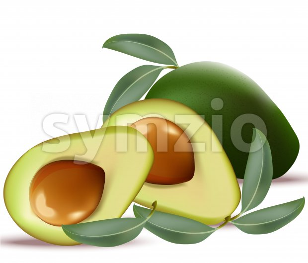 Avocado realistic Vector on white background illustrations Stock Vector