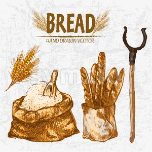 Digital color vector detailed line art golden loaves of baguettes in organic bag, sack with flour and scoop, wheat hand drawn set outlined. Vintage Stock Vector
