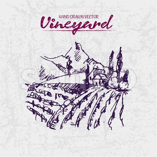 Digital color vector detailed line art purple vineyard fields on mountains background hand drawn illustration set. Thin artistic pencil outline. Stock Vector