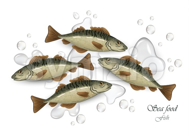 Mackerel Seafood fish Vector illustration. Waterdrops background Stock Vector