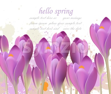 Spring background with purple tulips Vector. Watercolor flowers. Lovely greeting colorful paint splash illustration Stock Vector