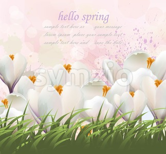Hello spring flowers card Vector. Watercolor white flowers and grass. Lovely greeting colorful splash illustration background Stock Vector