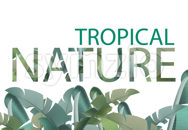 Tropical leaves vector card. Summer template design with palm nature Stock Vector