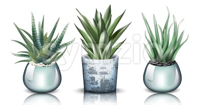 Aloe vera plants set collection Vector. detailed illustration design Stock Vector