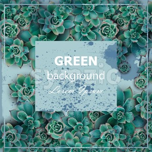 Succulent stars Green background Vector. Beautiful card floral design Stock Vector
