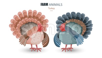 Turkey isolated Vector. cartoon characters funny illustration Stock Vector