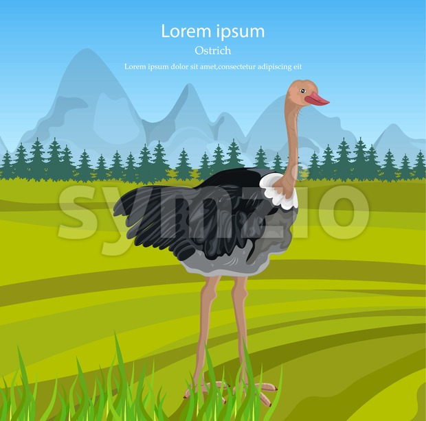 Ostrich Vector. Bird in the wild nature green background Stock Vector