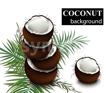 Coconut fruits Vector. Delicious natural fresh cracked coconuts illustration Stock Vector