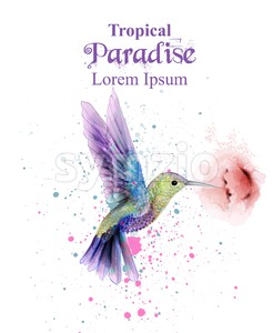 Watercolor humming bird Vector. Tropic paradise colorful bird. colorful paint stains splash Stock Vector