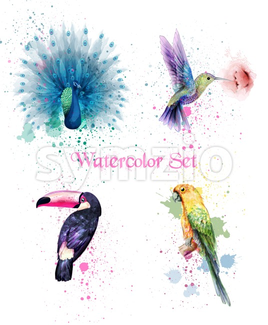 Watercolor birds set Vector. Peacock, parrot, humming bird illustration Stock Vector