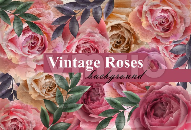 Vintage roses background Vector. Floral card retro decor. Wedding invitation or spring party card Stock Vector