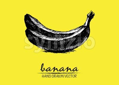 Digital vector detailed banana hand drawn Stock Vector