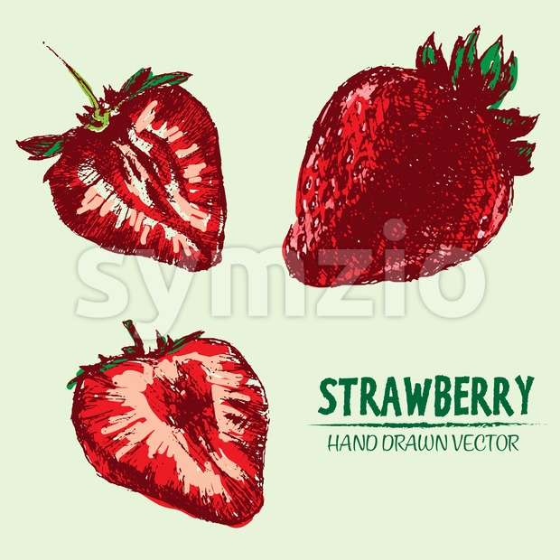 Digital vector detailed color strawberry Stock Vector