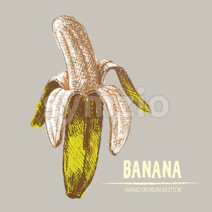 Digital vector detailed color banana hand drawn Stock Vector