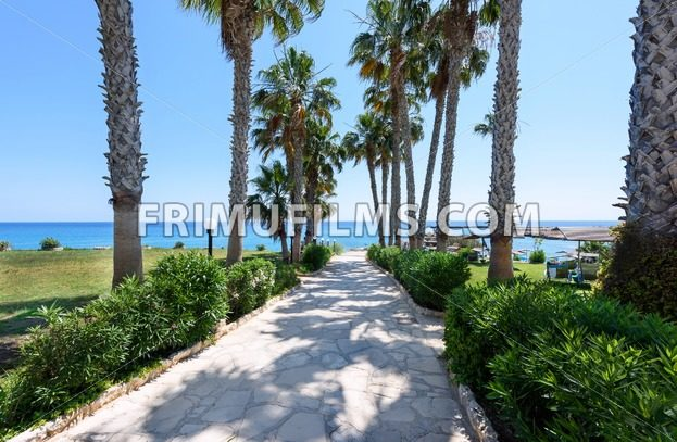 Palm trees road at the sea in protaras beach in cyprus island - frimufilms.com