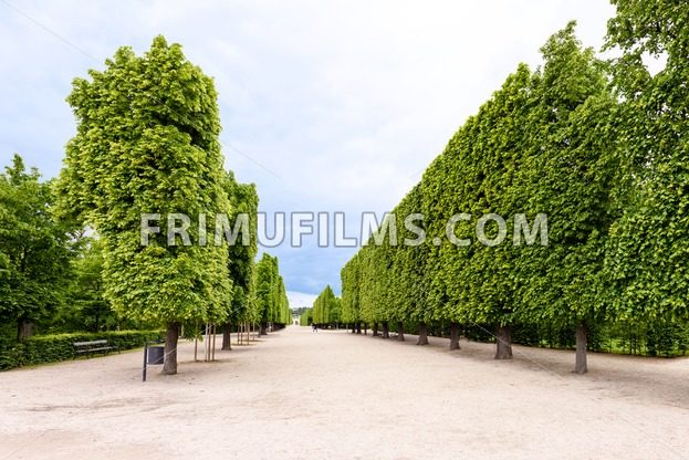 Photo view of famous green alligned trees at schonbrunn - frimufilms.com