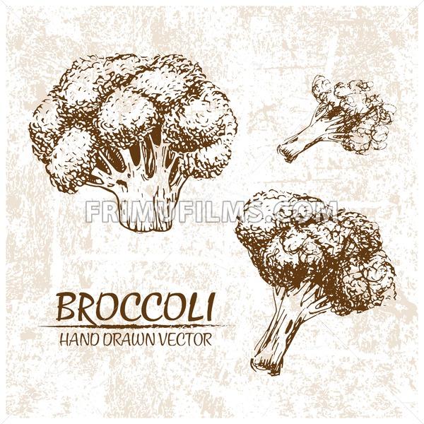 Digital vector broccoli hand drawn illustration - frimufilms.com