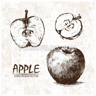 Digital vector detailed apple hand drawn - frimufilms.com