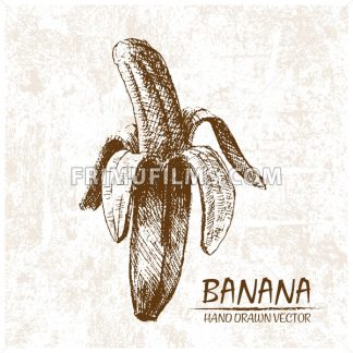 Digital vector detailed banana hand drawn - frimufilms.com