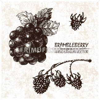 Digital vector detailed brambleberry hand drawn - frimufilms.com