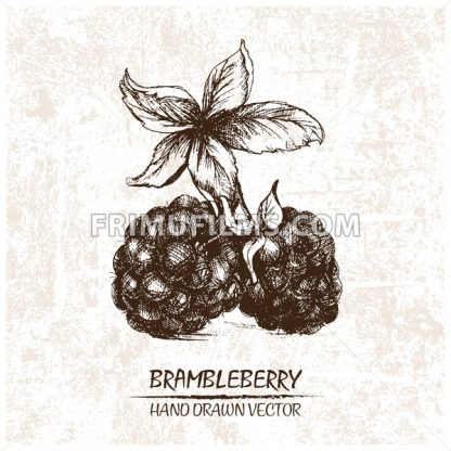 Digital vector detailed brambleberry hand drawn - frimufilms.com