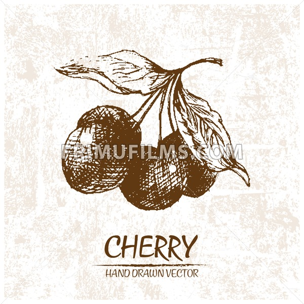 Digital vector detailed cherry hand drawn - frimufilms.com