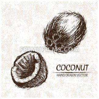 Digital vector detailed coconut hand drawn - frimufilms.com