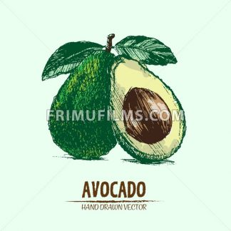Digital vector detailed color avocado hand drawn - frimufilms.com
