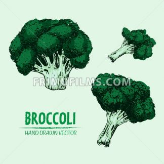 Digital vector detailed color broccoli hand drawn - frimufilms.com