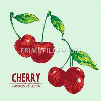 Digital vector detailed color cherry hand drawn - frimufilms.com