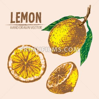 Digital vector detailed color lemon hand drawn - frimufilms.com