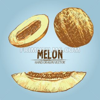 Digital vector detailed color melon hand drawn - frimufilms.com