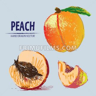 Digital vector detailed color peach hand drawn - frimufilms.com