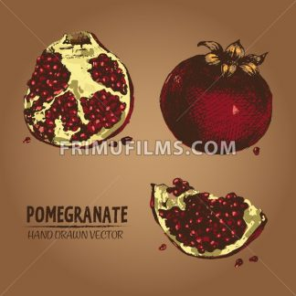 Digital vector detailed color pomegranate hand - frimufilms.com