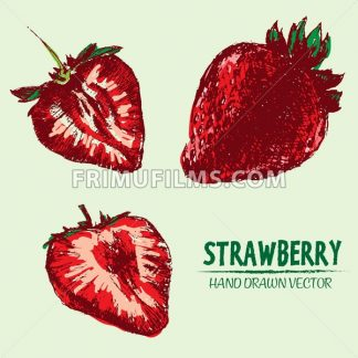Digital vector detailed color strawberry - frimufilms.com