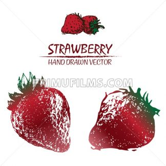Digital vector detailed color strawberry drawn - frimufilms.com