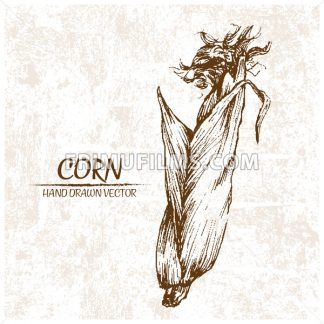 Digital vector detailed corn hand drawn - frimufilms.com