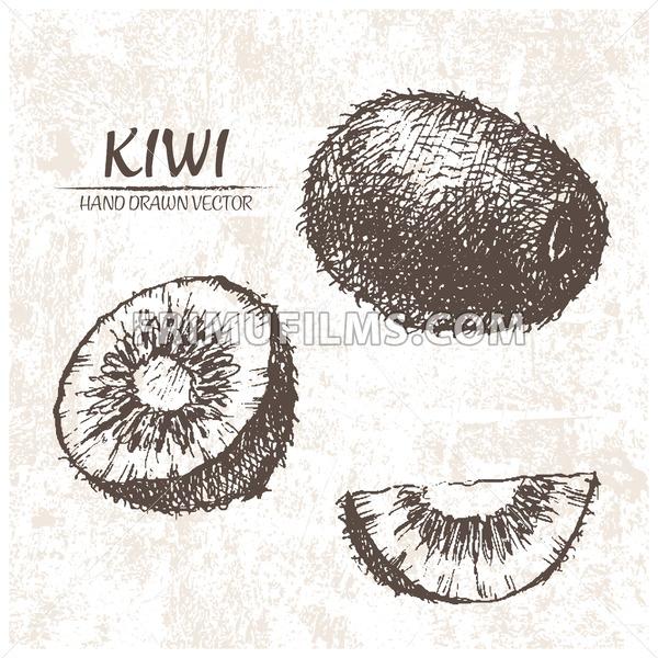 Digital vector detailed kiwi hand drawn - frimufilms.com