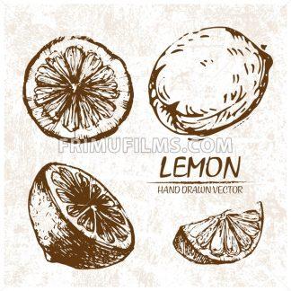 Digital vector detailed lemon hand drawn - frimufilms.com