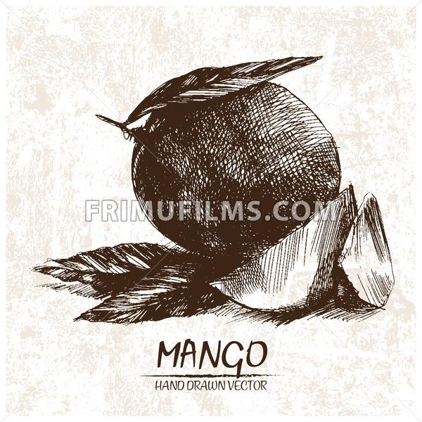 Digital vector detailed mango hand drawn - frimufilms.com
