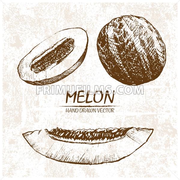 Digital vector detailed melon hand drawn - frimufilms.com