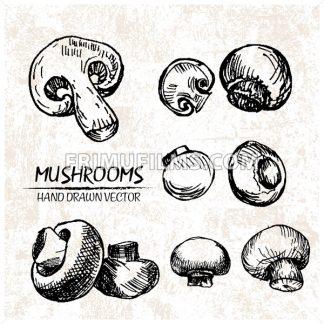 Digital vector detailed mushrooms hand drawn - frimufilms.com