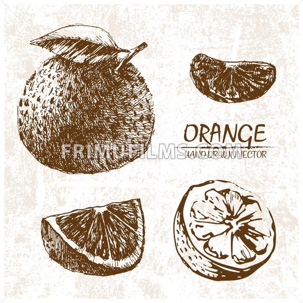 Digital vector detailed orange hand drawn - frimufilms.com