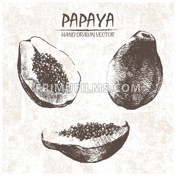Digital vector detailed papaya hand drawn - frimufilms.com