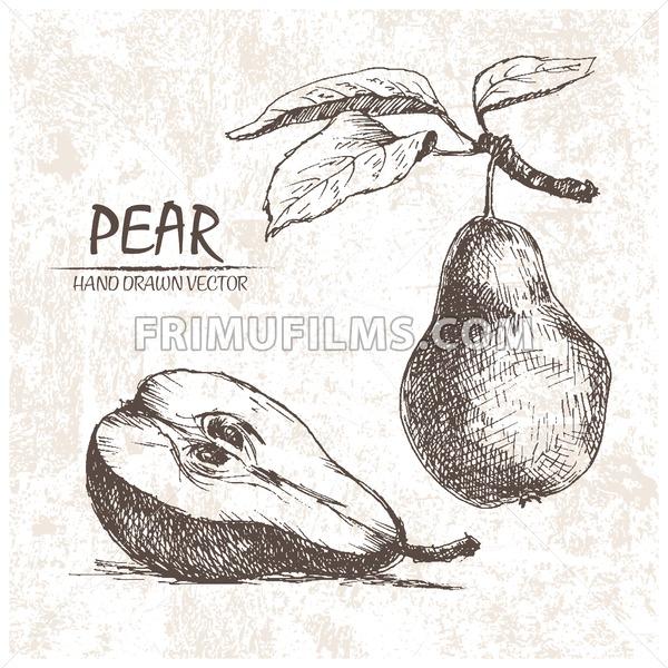 Digital vector detailed pear hand drawn - frimufilms.com