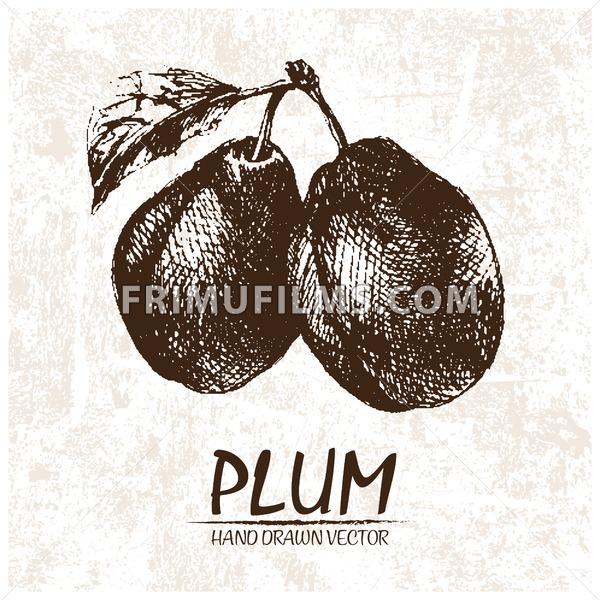 Digital vector detailed plum hand drawn - frimufilms.com