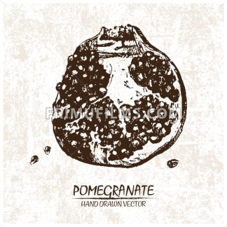 Digital vector detailed pomegranate hand drawn - frimufilms.com